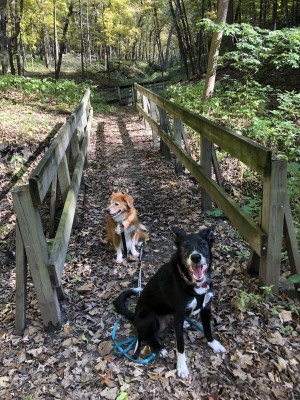 happy dogs that used to suffer from fear aggression in dogs