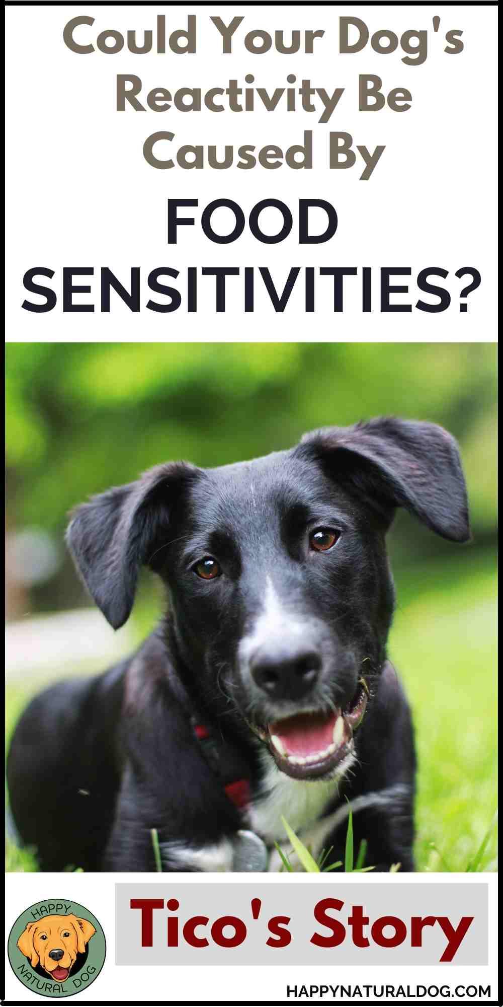 Dog Reactivity and Food Sensitivities