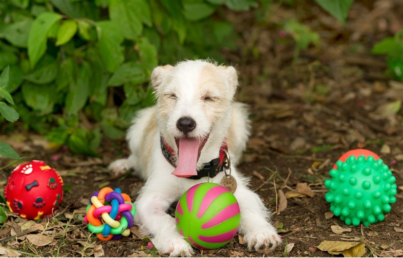 Happy dog surrounded by best gifts for dogs