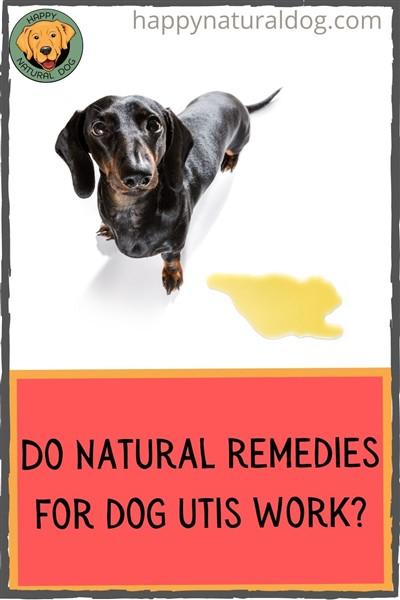 Do natural remedies for dog utis work pin