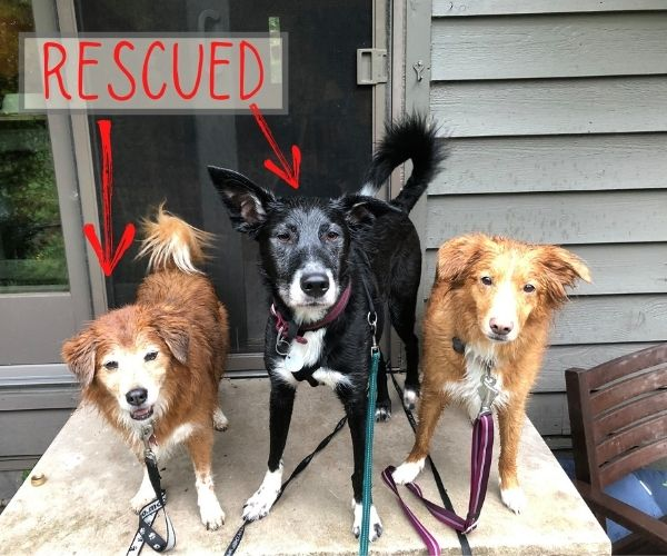 Rescued dogs picture for gift donation idea for dog lovers
