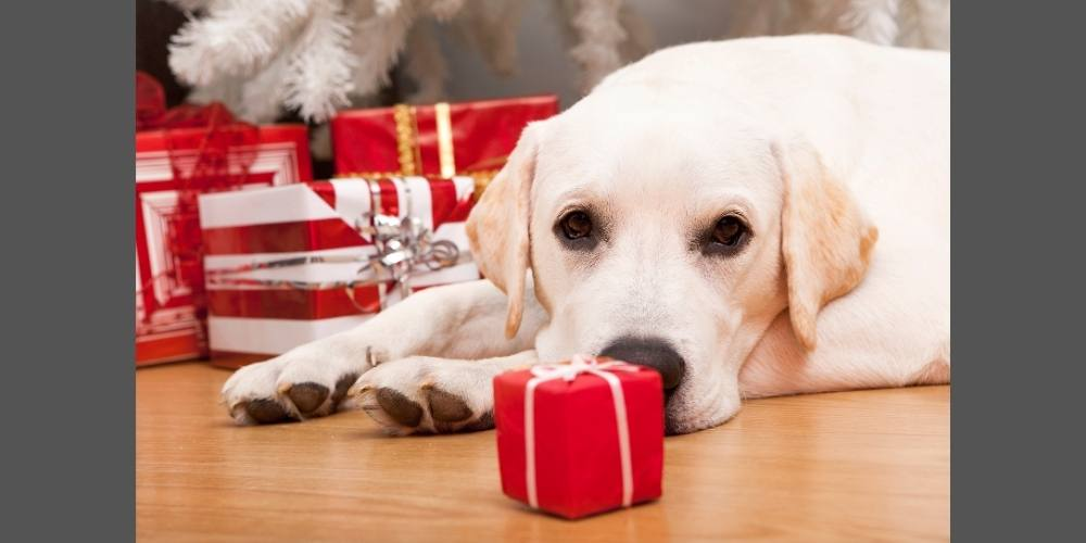 18 Effective Ways to Relieve Stress in Dogs During the Holidays