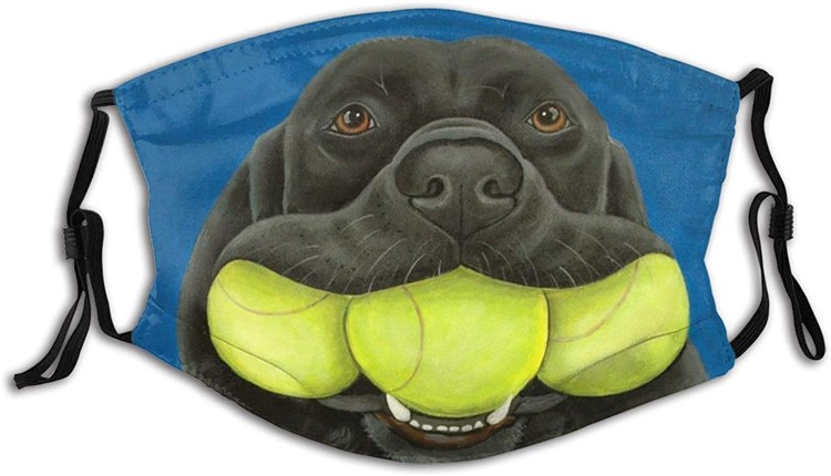 dog with tennis ball mask