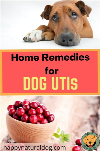 home remedies for dog utis