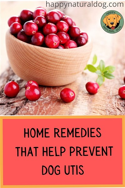 home remedies that help prevent dog utis pin
