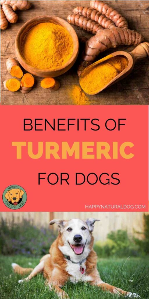 Benefits of Turmeric for Dogs pin 1