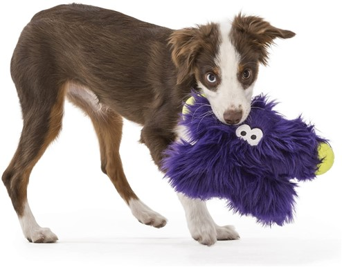 puppy holding west paw fergus puppy chew toy