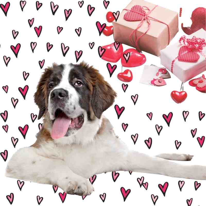 Valentine's Day Dog and Dog Lover Gift Ideas