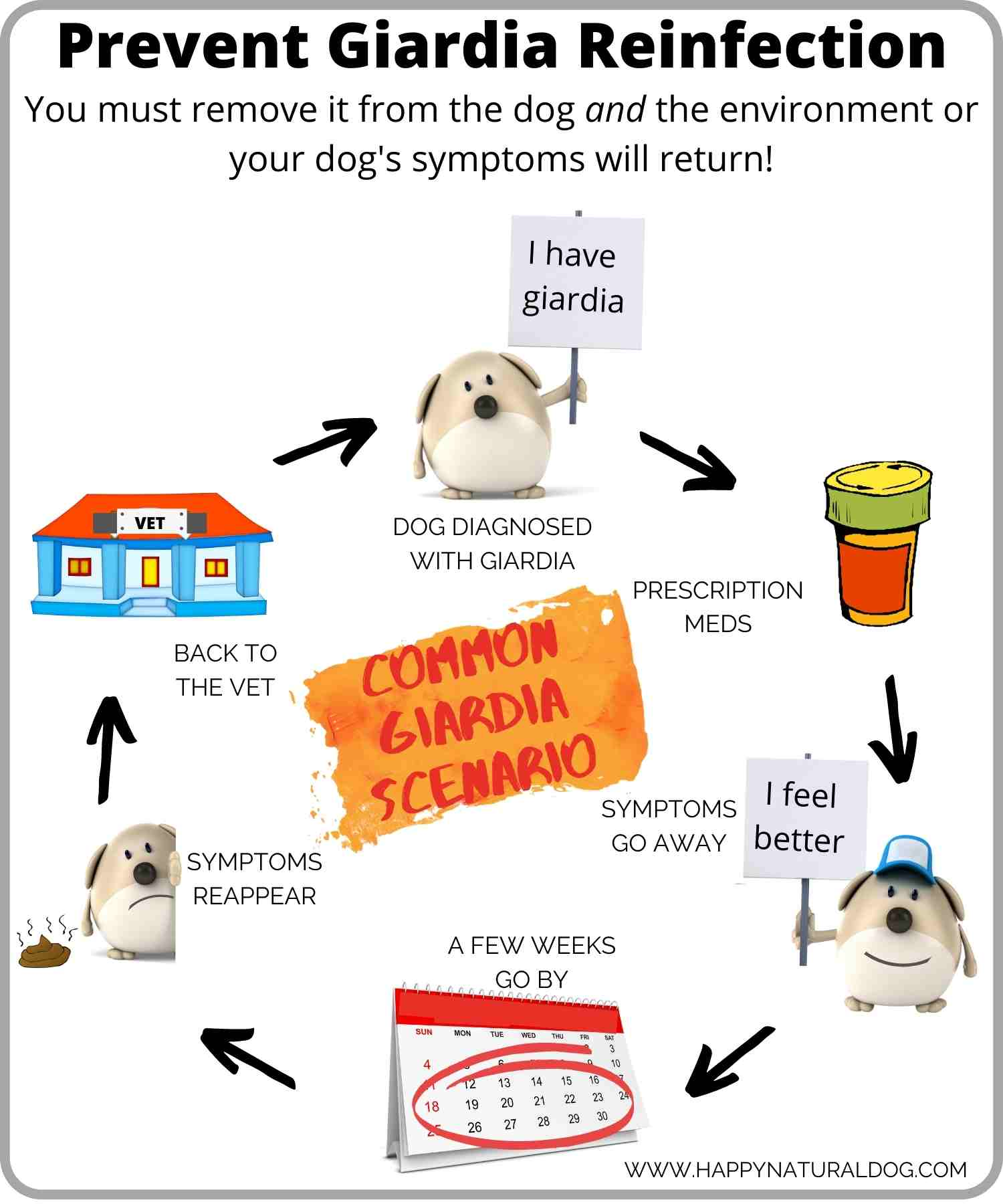 graphic showing the giardia cycle in dogs