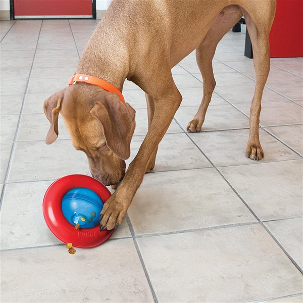 Kong Gyro interactive treat dispensing dog toy with dog