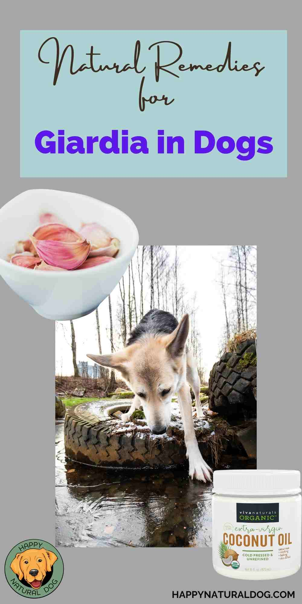 Natural Remedies for Giardia in Dogs