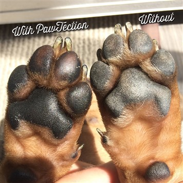 Pawtection dog paw protection before and after picture