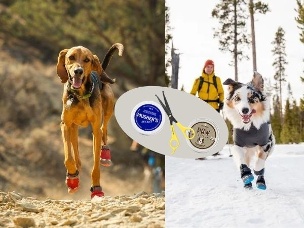 Summer and Winter Dog Paw Protection