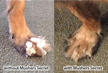 musher's secret dog paw protection wax before and after picture