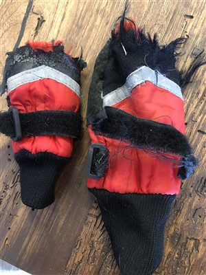 torn dog boots that had been used for winter paw protection