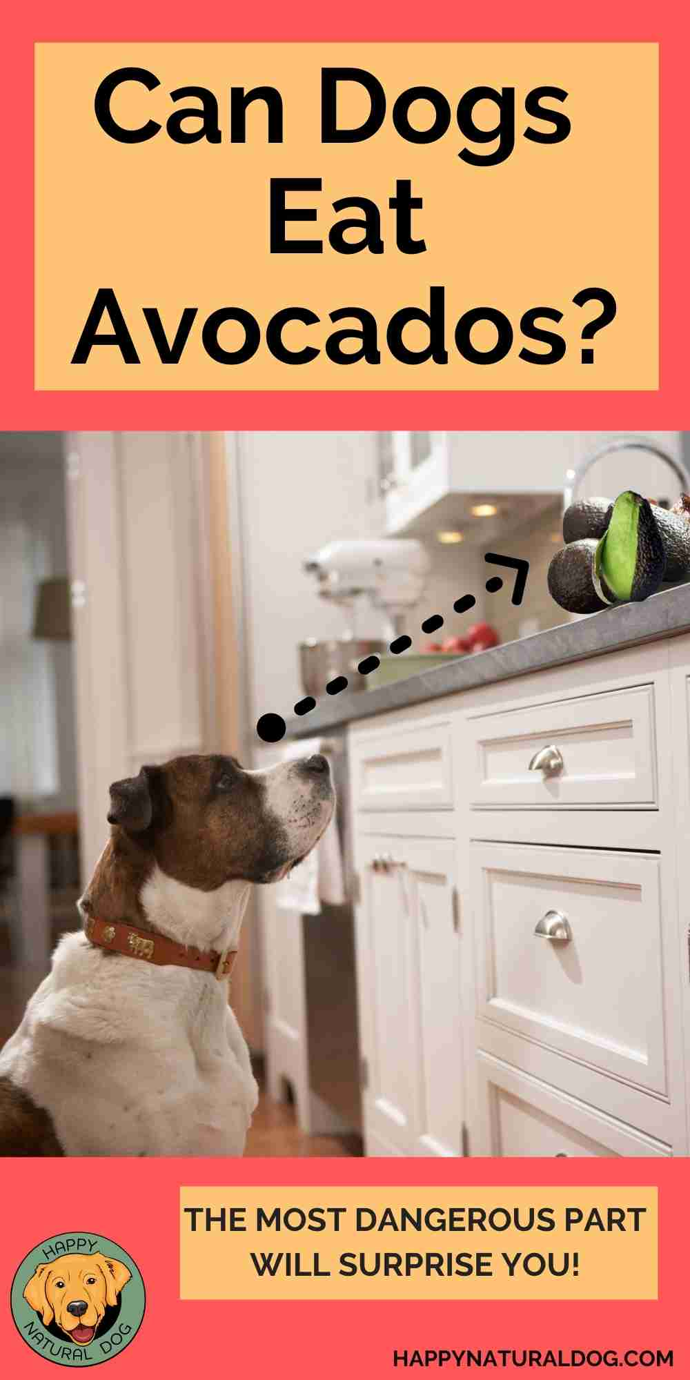 Can Dogs Eat Avocados pin