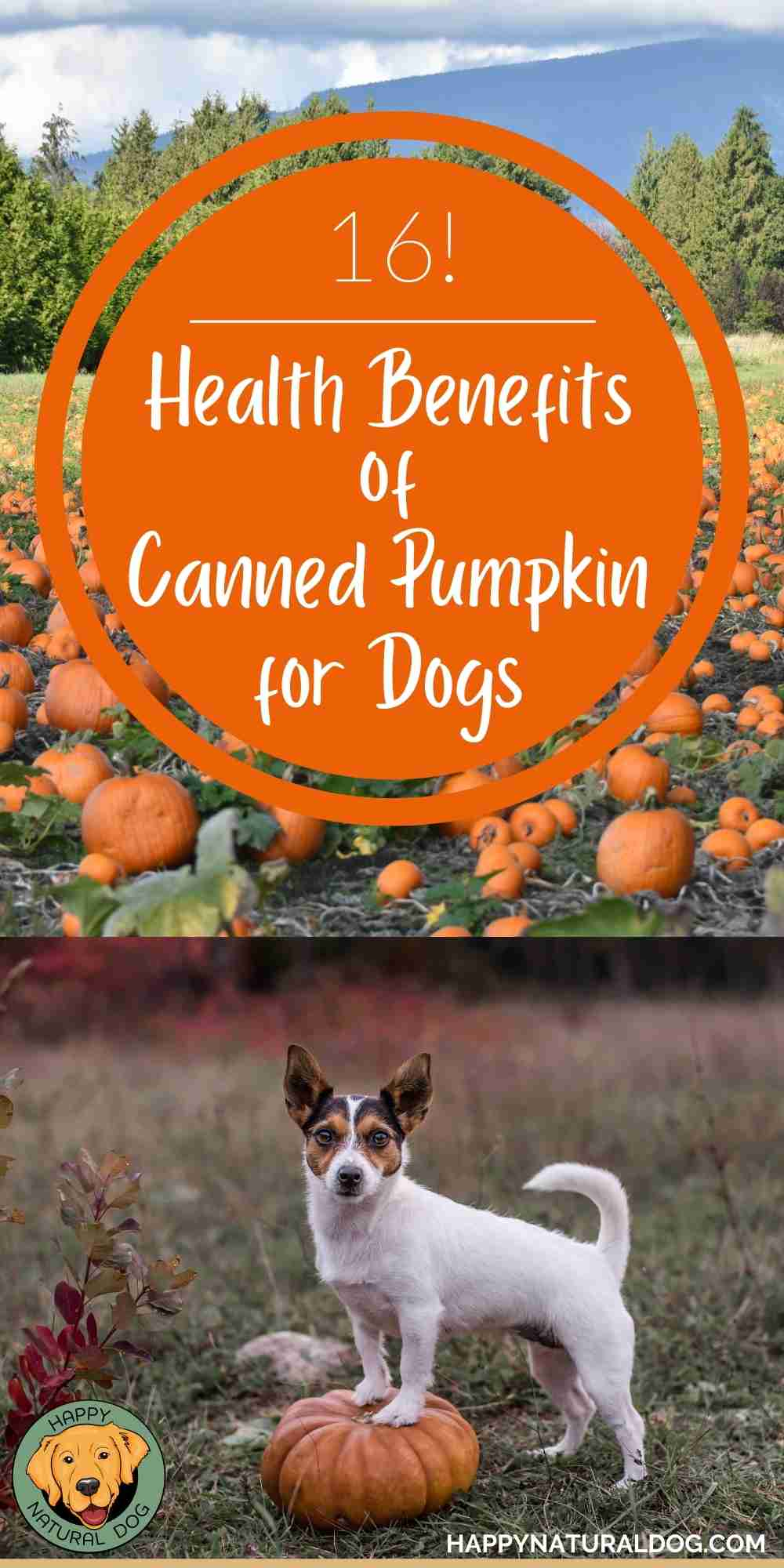 16 health benefits of canned pumpkin for dogs pin