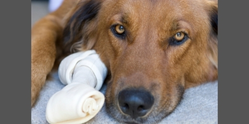 Are Rawhides Bad For Dogs?