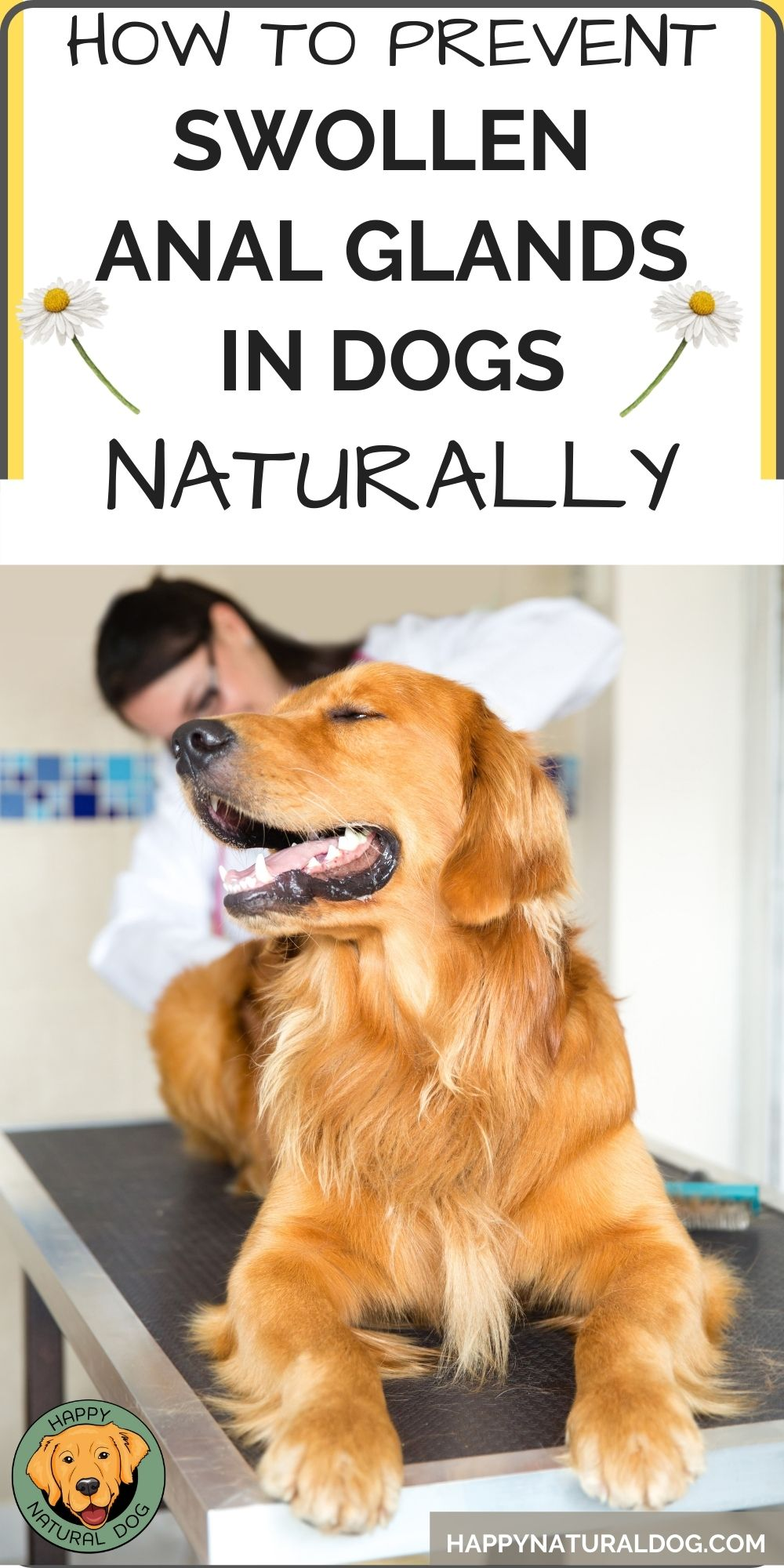 How to prevent swollen anal glands in dog PIN